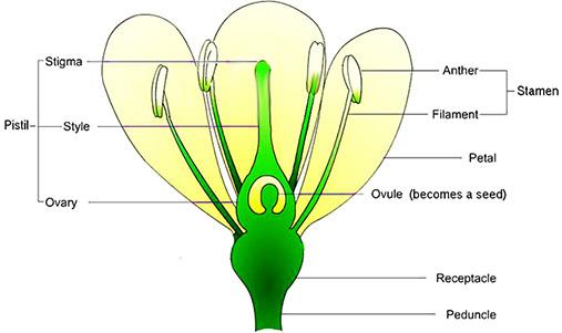 Heliamphora Pollination 101